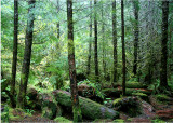 26 Typical Forest