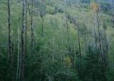 25 Forest Hillside