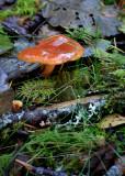 22 The Ubiquitous Fungi