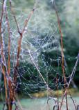 19 The Web Woven