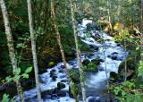 16 Alders and Creek