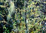 12 Lichen Land 2