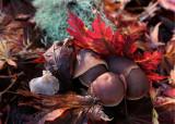 Leaves, Lichen, Mushrooms