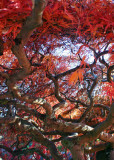 29 Twisting Branches under a Fiery Roof 2