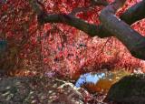 34 Pond, Rock, Maple