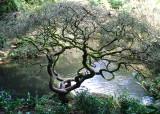 52 Kubota Winter Pond