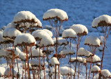 Snow Hats for Seed Heads