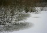 Winter Willow Lake