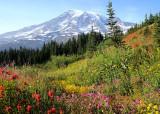 15 wildflowers near paradise