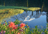 34 mountain reflection flowers