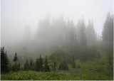 46 mountain fog