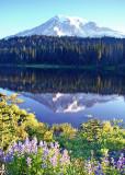 50 lupines lake mountain