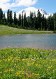 59 tipsoo flowers mountain