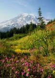 63 wildflower slopes
