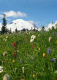 67 flower mountain