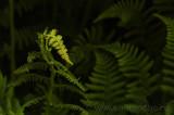 20110608_PVC_D90_0080_aliweb.jpg