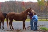 Cornell Equine Research