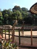 Zoo de São Paulo