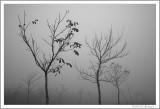 Foggy day (4)