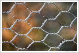 Frosted fence (2)