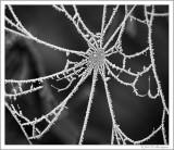 Spider's web (2)