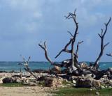 Bonaire 2006