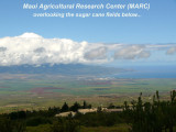 03- Maui Agricultural Research Center,  Hawaii