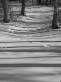 Striped Path.jpg