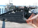 Menemsha Dock 2010.jpg