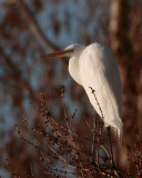 Egret at Lake Hancock.jpg