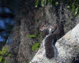 Circle B Squirrel in a Tree.jpg