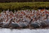 Pelican Bay.jpg