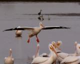 Pelican Landing.jpg