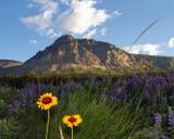 Mountain with Wildflowers.jpg