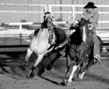Rodeo Cowboy corralling bronco black and white.jpg