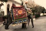 Dressed Elephant | Jaipur, India