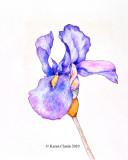 crayon iris - sm.jpg