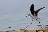 Birds, Lesvos August 2009