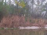 Foggy November Day - Navidad River