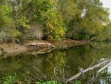 November Day - Navidad River
