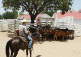 Cowboys Working Cattle