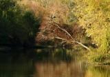 Anhinga and Autumn Colors
