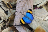 Butterflies of Tanzania