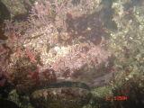 Abalone Diving - 2006 Season