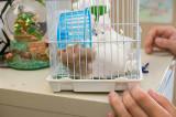 Shelter Hamster
