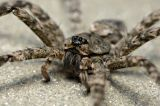 Spiders and Relatives