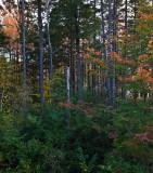Winhall, Vermont
