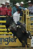 Bull Bucking
