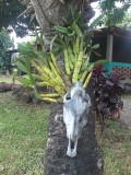 El Encanto guesthouse, Isla de Ometepe