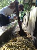 Processing coffee, Miraflor, Nicaragua